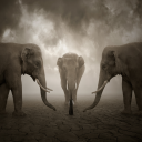 Image_500px__Photo_Elephant_whisperer_by_Leszek_Bujnowski